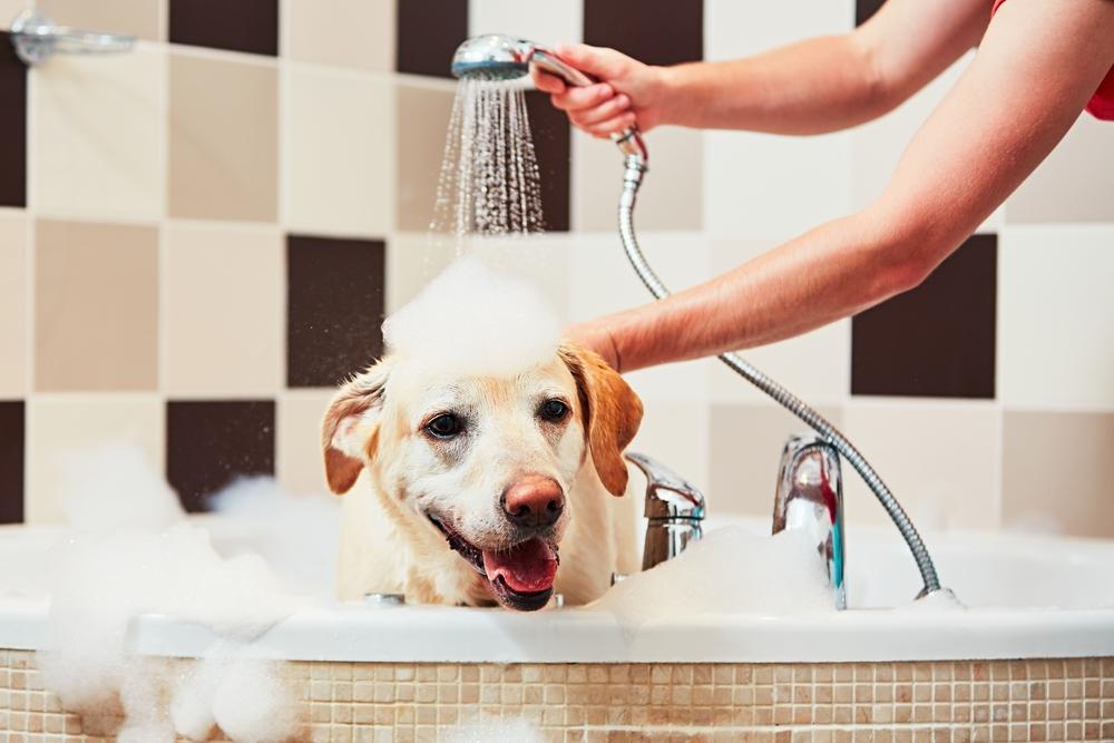Kuidas kujundada vannituba kaunilt